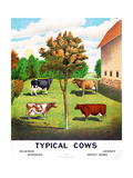 Typical Cows: Holstein, Jersey, Ayrshire, Short-Horn, 1904 Giclee Print
