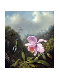Still Life with Orchid and Pair of Hummingbirds, C.1890S Giclee Print by Martin Johnson Heade