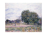 Walnut Trees, Effect of the Setting Sun - First Day of October, 1882 Giclee Print by Alfred Sisley