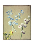 A Blue and a Lavender Hyacinth, and a Yellow Narcissus, C.1805 Giclee Print by Jean-Louis Prevost