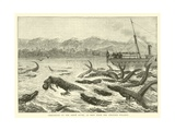 Crocodiles on the Shire River, as Seen from the Pioneer Steamer Giclee Print