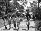 Adults and Children Carrying Loads of Bananas on their Heads, C.1960 Photographic Print