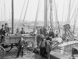 Unloading Oyster Luggers, Baltimore, Maryland, 1905 Photographic Print