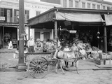 New Orleans, a Corner of the French Market, C.1900-10 Photographic Print