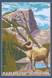 Big Horn Sheep, Rocky Mountain National Park Plastic Sign by  Lantern Press