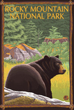 Rocky Mountain National Park, CO, Black Bear in Forest Plastic Sign by  Lantern Press