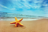 Starfish on the Beach Plastic Sign by PHOTOCREO Michal Bednarek