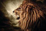 Roaring Lion Against Stormy Sky Wall Sign von NejroN Photo