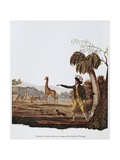 Francois Le Vaillant at the Camp Along the Orange River Giclee Print by Francois Le Vaillant