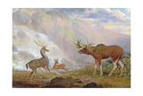 The Earl of Orford's Elk from Norway. Antelope from Africa and Stag from Prince's Island Giclee Print by George Garrard