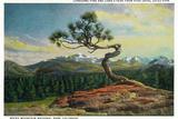 Lantern Press - Rocky Mt. Nat'l Park, Colorado - High Drive Lonesome Pine View of Long's Peak Plastové cedule
