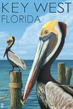 Key West, Florida - Brown Pelican Panneaux et Plaques par  Lantern Press