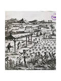 Slaves Working on a Tobacco Plantation in the Caribbean Giclee Print by Alain Manesson Mallet