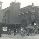Elephants Walking from the Docks Passing Kings Cross Station on the Way to Zsl London Zoo Photographic Print by Frederick William Bond