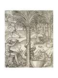 Inhabitants of Cape Verde Making Drinks from Palm Trees, Engraving from Universal Cosmology Giclee Print by Andre Thevet