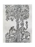 Nana Fruit, Tropical Medicinal Plant, Engraving from Universal Cosmology Giclee Print by Andre Thevet