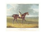 Filho Da Puta', the Winner of the Great St. Leger at Doncaster, 1815 Giclee Print by John Frederick Herring Snr