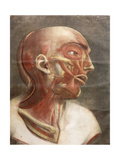Anatomical Head, from 'Myologie Complete En Couleur Et Grandeur Naturelle', 1746 Giclee Print by Jacques-Fabien Gautier d'Agoty