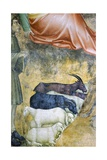 Sheep Grazing, Detail from Annuciation by Angel Giclee Print by Giovanni Da Milano