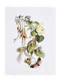 Feasting and Fun Among the Fuschias Giclee Print by Richard Doyle