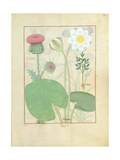 Plumed Thistle, Water Lily and Castor Bean Plant, Illustration from 'The Book of Simple Medicines' Giclee Print by Robinet Testard