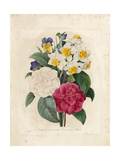 Bouquet of Camellias Giclee Print by Pierre-Joseph Redouté