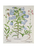 Medium Flore Argenteo Giclee Print