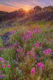 Wildflower Sunset at Table Mountain Photographic Print by Vincent James