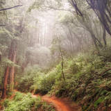 On The Misty Woods Trail Photographic Print by Vincent James