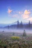 Mount Hood Misty Meadow Photographic Print by Vincent James