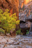 Autumn Scene, Virgin Narrows, Southern Utah Photographic Print by Vincent James