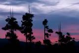 Lassen Sunset Tree Silhouettes, Lassen Volcanic National Park Photographic Print by Vincent James