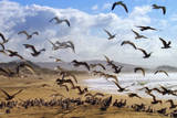 Beach Birds, Half Moon Bay, California Coast Papier Photo par Vincent James
