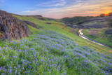 Wildflower Hillside at Sunset, Table Mountain Photographic Print by Vincent James