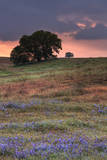 Late Afternoon Storm, Central California, Paso Robles Photographic Print by Vincent James