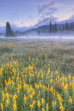 Misty Morning at Mount Hood Flower Field, Oregon Photographic Print by Vincent James