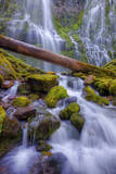 Scene at Majestic Lower Proxy Falls - Central Oregon Photographic Print by Vincent James