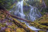 Beneath Lower Proxy Falls, Oregon Photographic Print by Vincent James