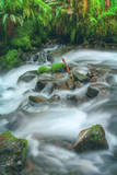 Spring Creek Detail, Columbia River Gorge, Oregon Photographic Print by Vincent James