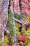 Fall Color in Zion Canyon, Southern Utah Photographic Print by Vincent James