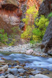 Fall Color in The Virgin Narrows, Southern Utah Photographic Print by Vincent James