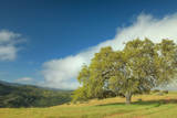 Oak Tree and Central Valley Hills, California Photographic Print by Vincent James