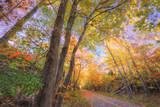 Fall Color Road, Acadia National Park, Maine Photographic Print by Vincent James