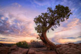 Twisty Tree at Dead Horse Point, Southern Utah Photographic Print by Vincent James