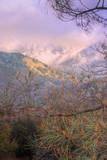 Landscape Array, Mount Diablo State Park Photographic Print by Vincent James