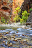 Autumn in The Virgin Narrows, Southern Utah Photographic Print by Vincent James