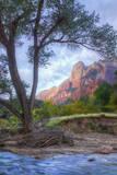 Virgin Riverside Landscape, Zion National Park Photographic Print by Vincent James