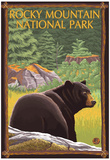 Rocky Mountain National Park, CO, Black Bear in Forest Prints