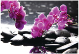 Branch Purple Orchid Flower With Therapy Stones Posters