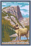 Big Horn Sheep, Rocky Mountain National Park Prints